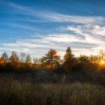 jesen (1)