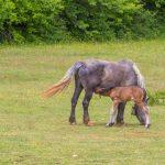 konji,štete