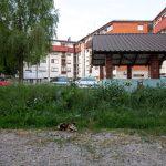 Uglovnica (3)