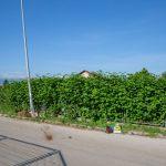prometna Plodine (5)