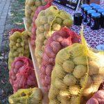 Dan-krumpira-Lovinac5-e1632570001279
