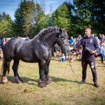 konji (17)