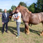 konji (21)