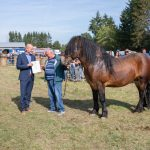 konji (24)
