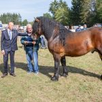 konji (25)