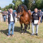 konji (27)
