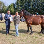 konji (29)