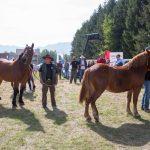 konji (3)