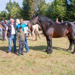 konji (31)