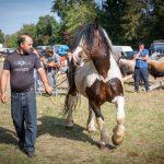 konji (33)