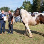 konji (34)